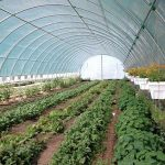 Farmtek Greenhouse,marijuana greenhouse for sale,marijuana greenhouses,marijuana in greenhouse,green house marijuana,how to grow marijuana in a greenhouse,